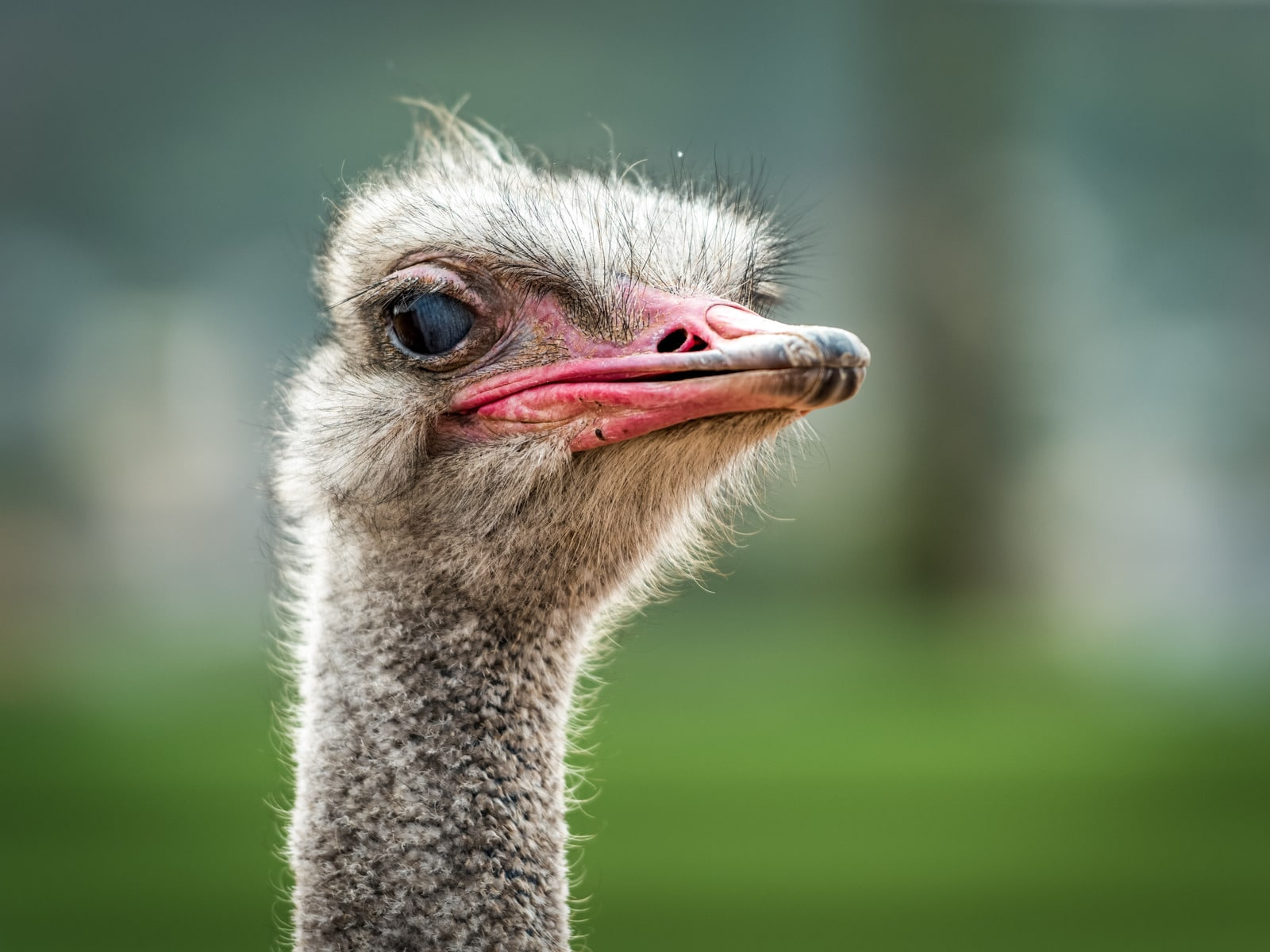 Accountant A, The Ostrich gets  his head out of the sand