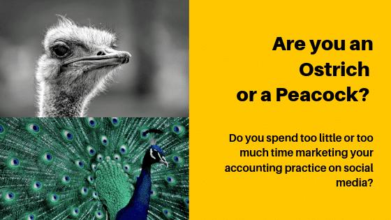 Ostrich Peacock Social Media metaphor