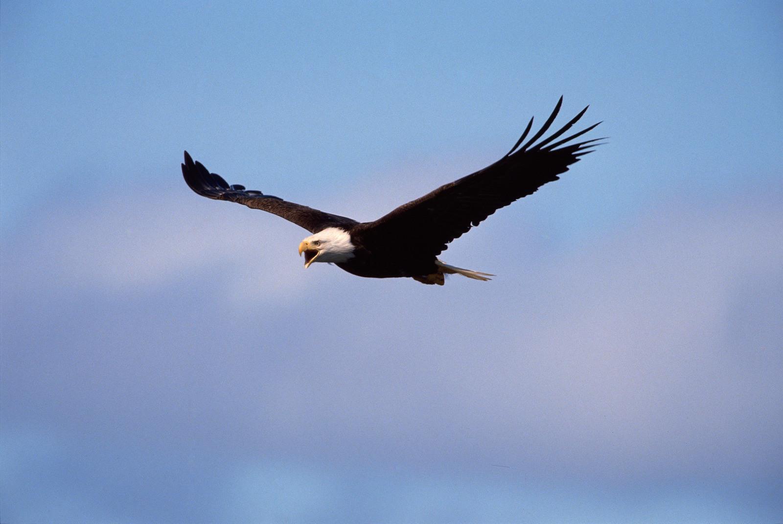 Accountant C, The Eagle